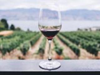 Vineyard Tour